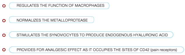 REGULATES THE FUNCTION OF MACROPHAGES, NORMALIZES THE METALLOPROTEASE, STIMULATES THE SYNOVIOCYTES TO PRODUCE ENDOGENOUS HYALURONIC ACID  PROVIDES FOR ANALGESIC EFFECT AS IT OCCUPIES THE SITES OF CD42 (pain receptors)